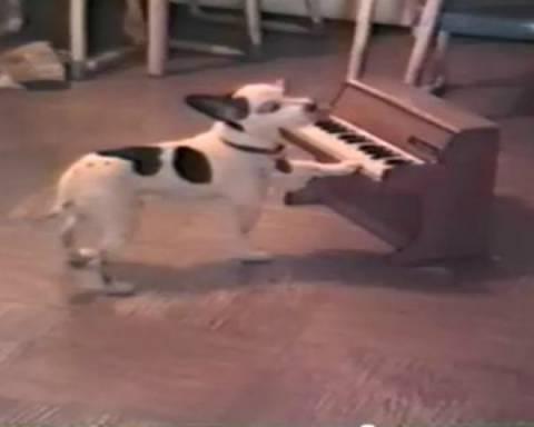 Απίστευτος σκύλος παίζει πιάνο και... τραγουδάει!