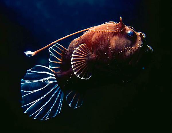 Τα παράξενα πλάσματα της θάλασσας