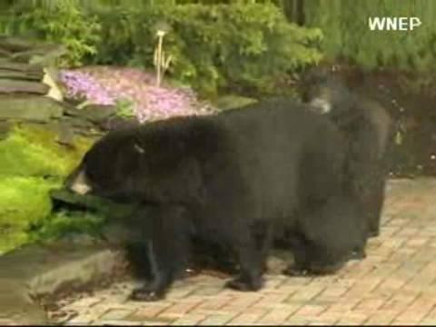Βίντεο: Αρκούδες διακόπτουν μετεωρολογικό δελτίο