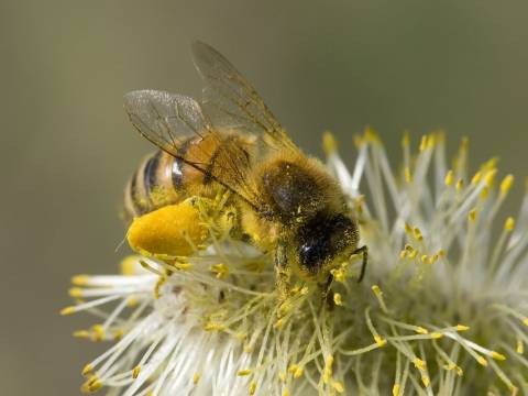 Έπινε τον καφέ της και έπεσε νεκρή από τσίμπημα μέλισσας!