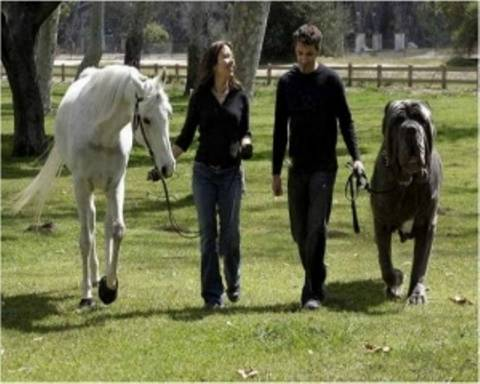 Τεράστιοι σκύλοι που δύσκολα θα χωρούσαν σε οποιοδήποτε σπίτι!