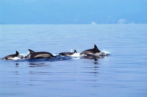 Θάνατοι προστατευόμενων θαλάσσιων ειδών τον Μάιο