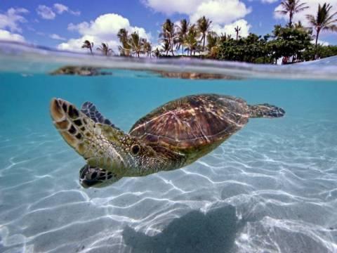 Εκπληκτικές υποβρύχιες φωτογραφίες!