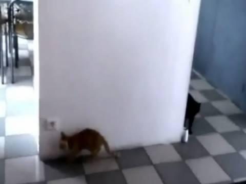 Ξεκαρδιστικό βίντεο: Γατάκια-νίντζα παίζουν κρυφτό