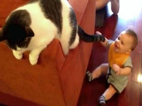 Ένα... επίμονο μωρό τα βάζει με την ουρά μιας γάτας! (vid)