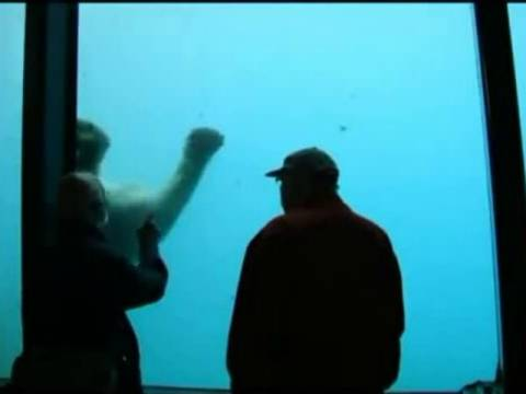 Βίντεο: Πολική αρκούδα σπάει το τζάμι ενυδρείου