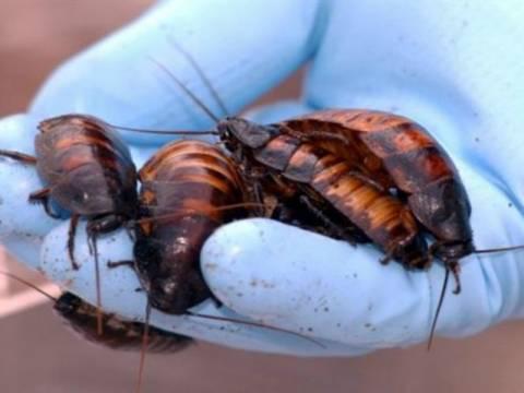 Κατσαρίδες: Τι βλέπουν οι άντρες και τι οι γυναίκες! (pic)