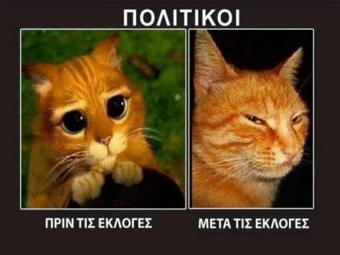 «Γατάκια...πολιτικοί»: Η φωτογραφία που σαρώνει στο Facebook