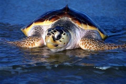 Αποκεφάλισαν θαλάσσιες χελώνες με τσεκούρι!
