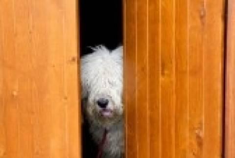 Προσοχή στα σπρέυ αναισθητοποίησης σκύλων