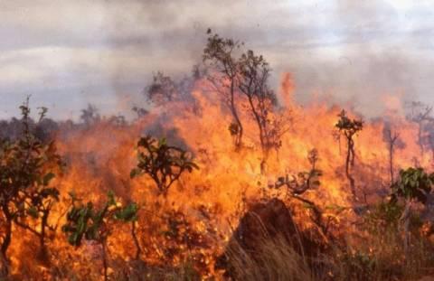 Πυρκαγιά σε δασική έκταση στην Κορινθία