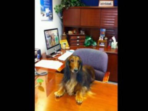 Όταν τα σκυλάκια πάνε γραφείο! (pics)