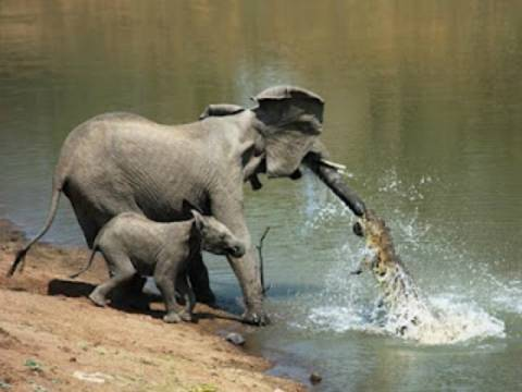 Εκπληκτικό: Όταν το παιδί σώζει τη μάνα! (pics)