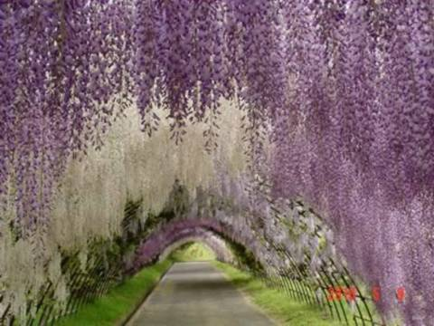 Τα πιο παράξενα τούνελ που έχετε δει! (pics)