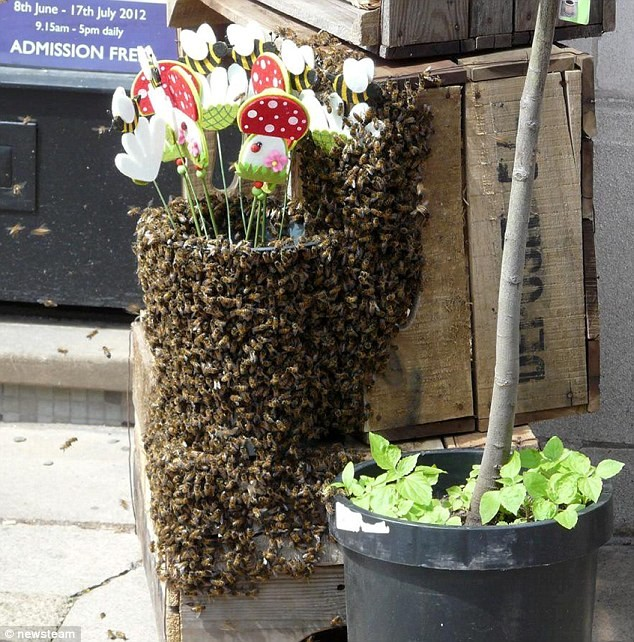 Απίστευτο: Πολιορκία 3,000 μελισσών σε... ανθοπωλείο! (pics)