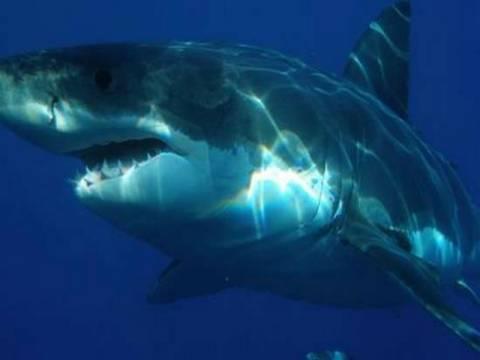 20 πράγματα πιο θανατηφόρα από έναν καρχαρία!