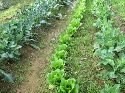 Κομοτηνή: Eγκαίνια του πρώτου Συνεργατικού Λαχανόκηπου