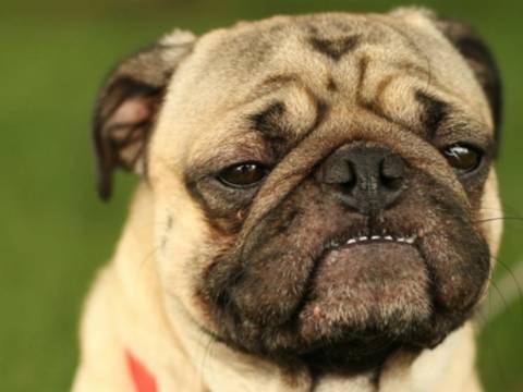 Απίστευτες φωτογραφίες: Σκυλάκια με παραπονεμένο ύφος!