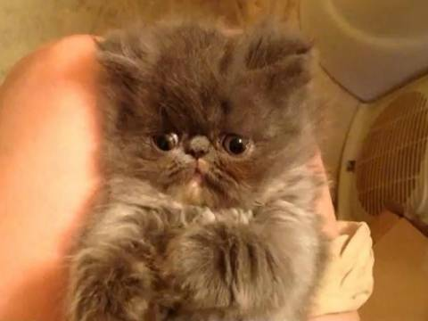 Βίντεο: To γλυκό γατάκι που δεν μπορεί να παραμείνει με τίποτα ξύπνιο