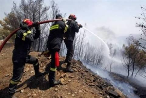 Υπό μερικό έλεγχο η πυρκαγιά στον Δομοκό