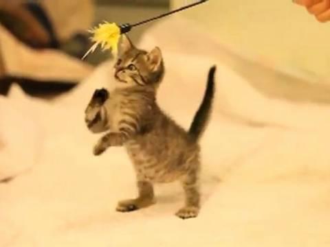 Mάθημα ζωής: Συγκινεί το γατάκι που γεννήθηκε με κινητικά προβλήματα