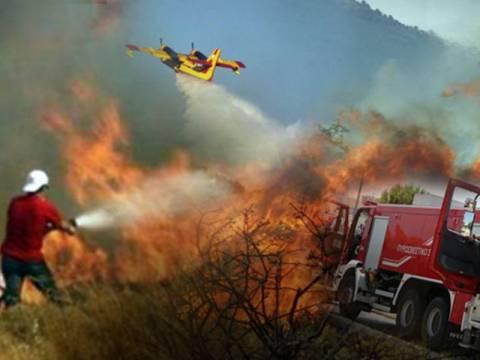 Συναγερμός στην Κερατέα: Πυρκαγιά κοντά σε κατοικημένη περιοχή