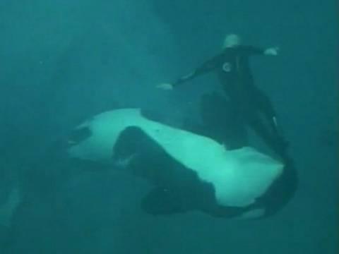 Σοκαριστικό βίντεο: Φάλαινα δαγκώνει και παγιδεύει τον εκπαιδευτή της