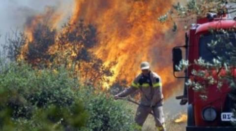 Σε εξέλιξη νέα πυρκαγιά στην Αχαΐα