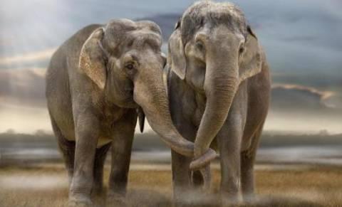 Δείτε πως οι τουρίστες αφανίζουν τους ελέφαντες (video)