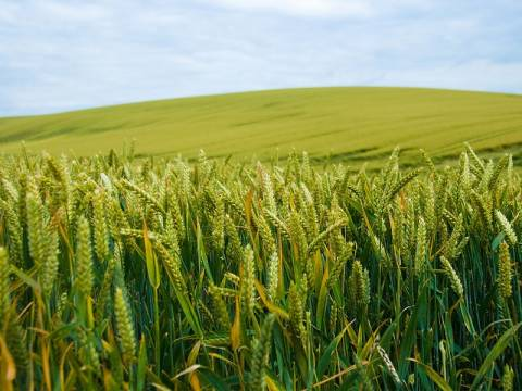 Μετά την οικονομική έρχεται και επισιτιστική κρίση