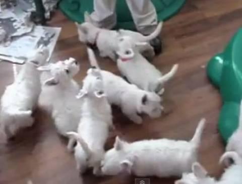 Video: Τα λαίμαργα κουταβάκια
