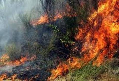Πυρκαγιά στην περιοχή Δαμάσι της Λάρισας