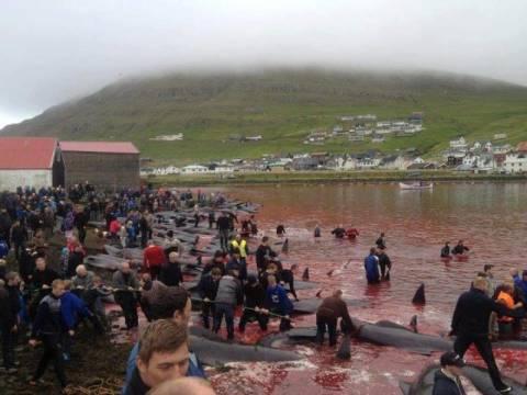 ΣΟΚ: Γενοκτονία δελφινιών στα νησιά Φερόε