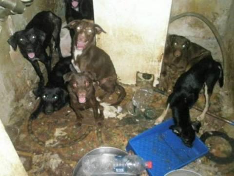 ΣΟΚ! Εγκατέλειψαν σε σπίτι 30 σκυλιά