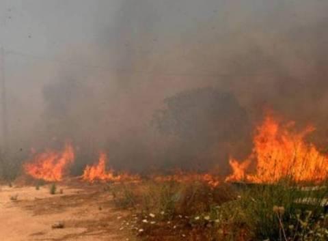 Πυρκαγιά στο Μαντούδι Ευβοίας