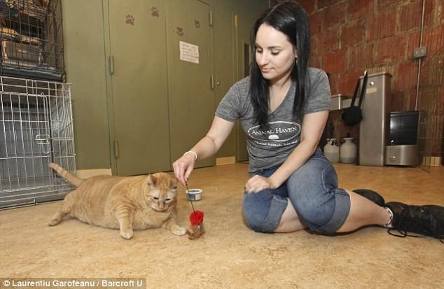 Πέθανε ο πιο χοντρός γάτος του κόσμου