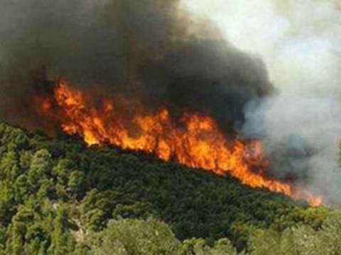 Υπό μερικό έλεγχο οι φωτιές σε Δομοκό και Μαντούδι