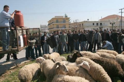 Από τη Δευτέρα η καταβολή αποζημιώσεων στους κτηνοτρόφους