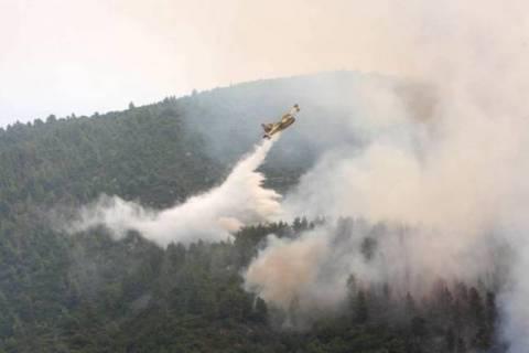 Σε ύφεση η πυρκαγιά στο Άγιο Όρος