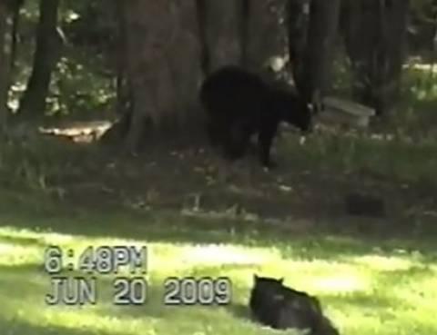 Video: Η αρκούδα είδε τη γάτα και φοβήθηκε