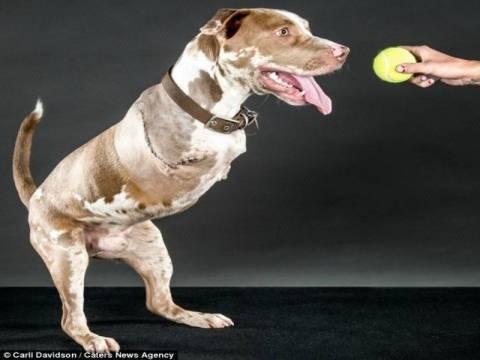 Συγκλονιστικό: Το σκυλάκι που έμαθε να περπατά σαν άνθρωπος