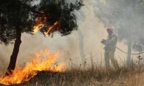 Φωτιά στο Ριζόμυλο Μεσσηνίας