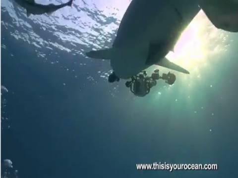 Video: Καρχαρίας τα... πήρε και επιτέθηκε σε κάμερα!