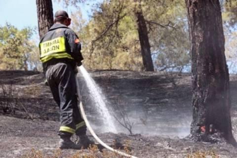 Υπό έλεγχο πυρκαγιά στην Κύπρο