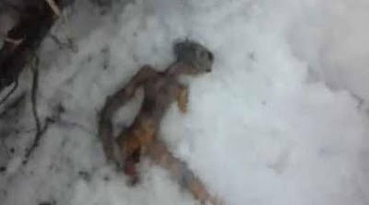 Η αλήθεια για τον νεκρό εξωγήινο που βρέθηκε στη Σιβηρία