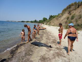 Βρέθηκε νεκρό δελφίνι στη Χαλκιδική