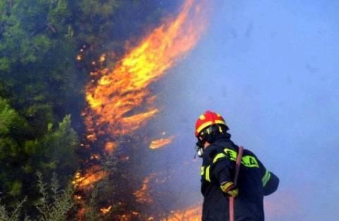 Σε εξέλιξη πυρκαγιά στη Δροσιά Χαλκίδας