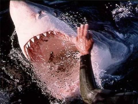 35 είδη καρχαρία ζουν στα ελληνικά νερά