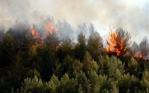 Πυρκαγιά σε δασική έκταση στην Κορινθία!
