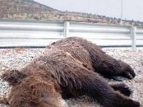 Aρκουδάκι θύμα τροχαίου στην Καστοριά